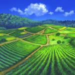 フロンタム畑
